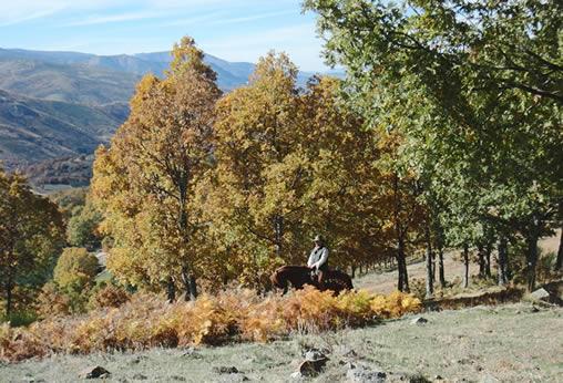 Fin de semana Otoño: Hoyos del Espino-Piedrahíta